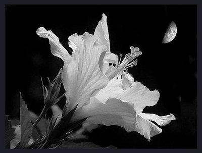 Poema de Luna