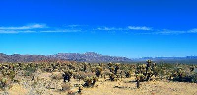 Mojave  the Desert