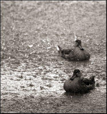 wet ! wet ! wet !