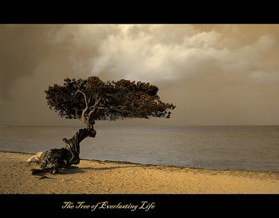 The Tree of Everlasting Life