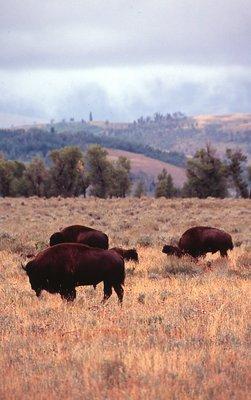 Herd Instinct