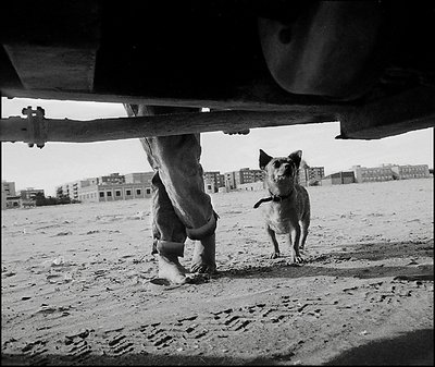 Girl's legs and Dog under Land Rover