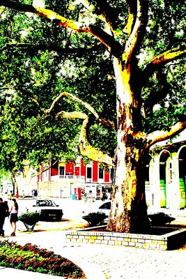 Tree and Boulevard