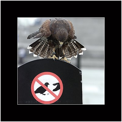 Dont Feed The Pigeons