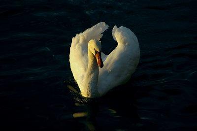 Lago - negro