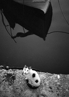 cat and boat