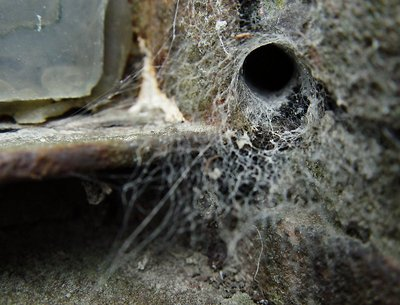 Into the Spider's world#28