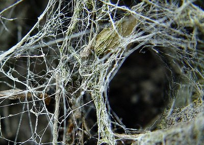 Into the Spider's world#29