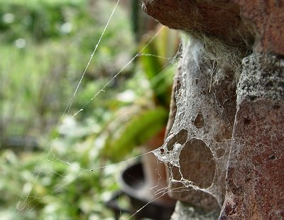 Into the Spider's world#30