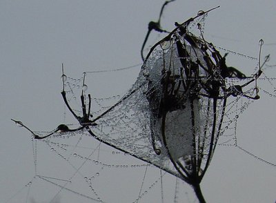 Into the Spider's world#31
