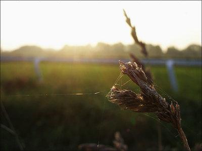 Turf sun-down