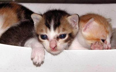 PUSI CATS
