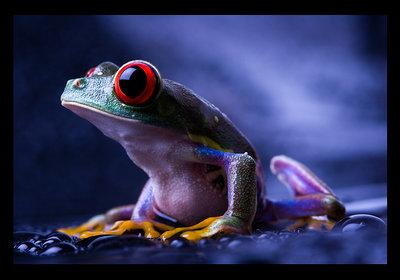 [ WET frog ]