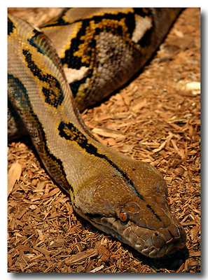Cooperative Python