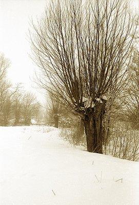 Winter, A.D. MMV