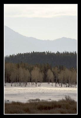 Forest, Hill, Ridge - II
