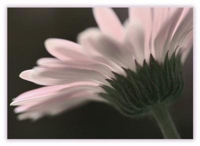 ...delicate...