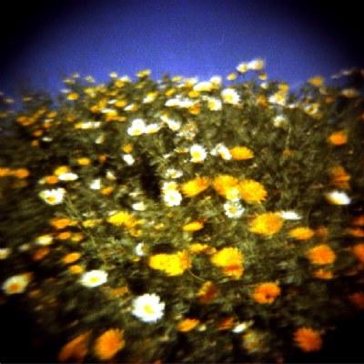 Funky Flowers (I)
