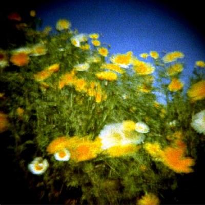 Funky Flowers (II)