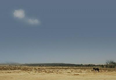 Alone Donkey