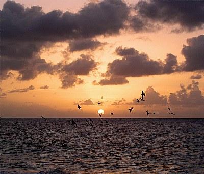 Seagulls & the Sun