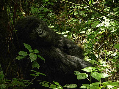 I need a nap. Rwanda