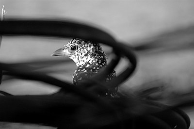 Bird shot 1