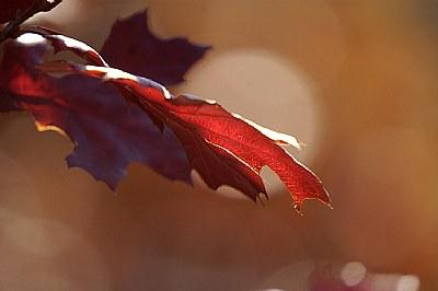 autumn's glow ii