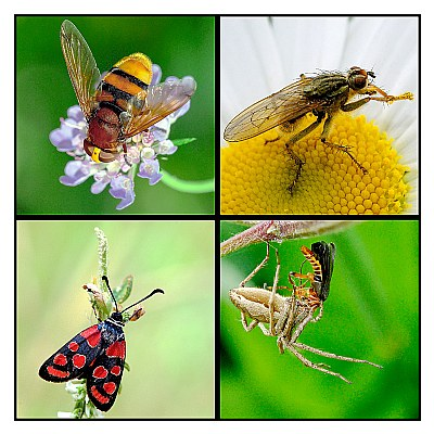 Insects.....