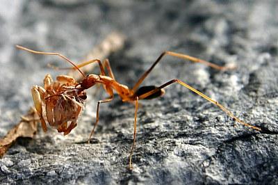 Ants Picnic