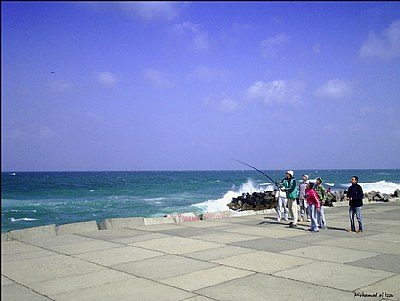 Bosseyed fishers