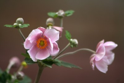 Flor otoñal...