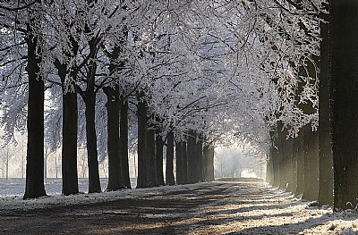 White withe frost