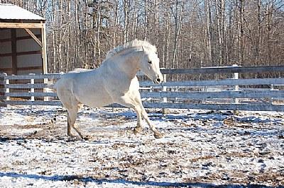 I love horses 5