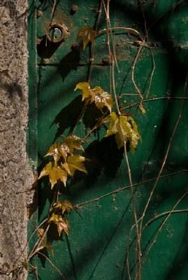 Prime foglie