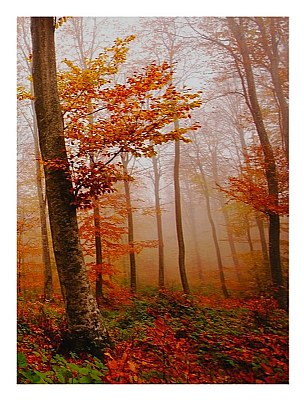 Colors in the autumn forest