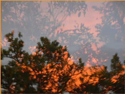 Reflections on the fire storms