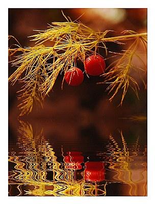 Reflected Berries
