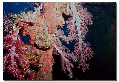 Soft Coral Colors