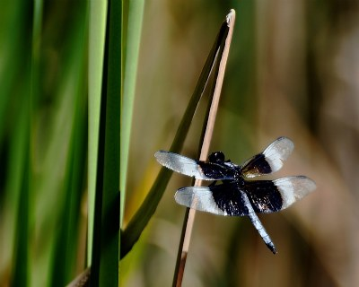 Amoung the reeds