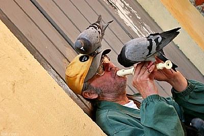 Pidgeon whisperer