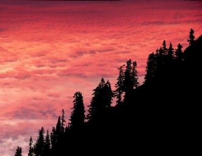 Pines at Sunrise