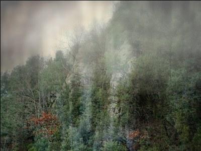 into the fog.6