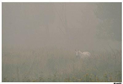 White Horse in White Smoke