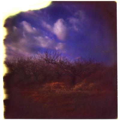 winter peach trees