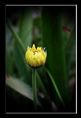 Spring Flower-26-