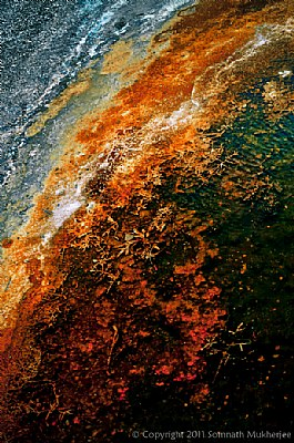 Abstract in Nature | Upper Geyser Basin | Yellowstone National Park