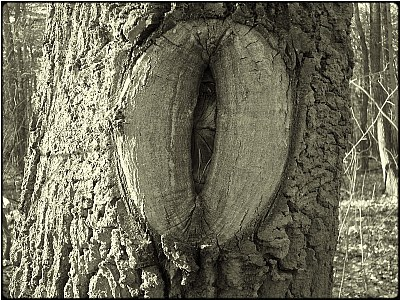 the vulva tree