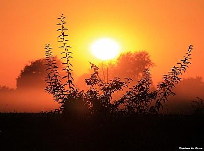 Dusty Field Sunset