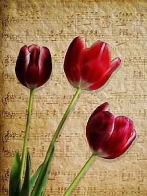 Three Tulips   & Sheet Music